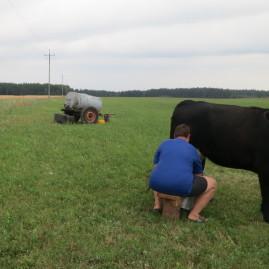 Mleko prosto od krowy